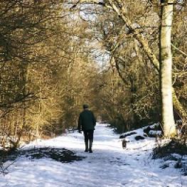 Kingswood LNR Winter